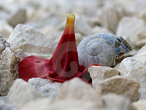 Flower Head And Shell On Stones Stock Images