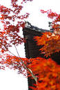 Temple roof in Autumn Royalty Free Stock Photography