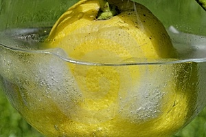 Lemon Cocktail Stock Photography - Image: 2502152