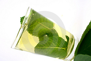 Ice Green Tea Stock Photo - Image: 2507410