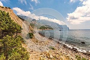 Coastline With Pine Trees Royalty Free Stock Image - Image: 25002606