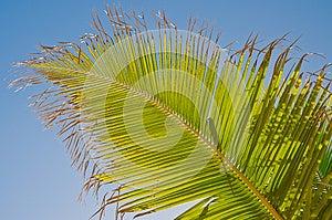 Palm Leaf Royalty Free Stock Image - Image: 25023626