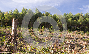 Sylviculture Photo stock - Image: 25037980
