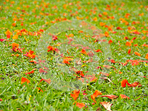 Petal On Grass Field Stock Images - Image: 25043784