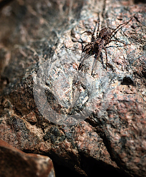 Spider Macro Royalty Free Stock Photography - Image: 25048997