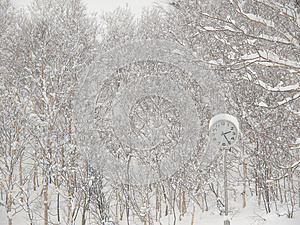 Clock In The Park In Winter Royalty Free Stock Images - Image: 25062219