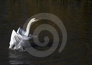 Support Grand Et Fier Image libre de droits - Image: 2514356