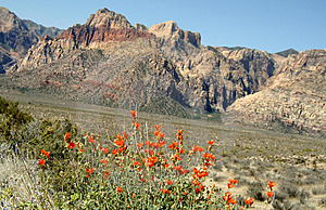 Red rock canyon spring flowers Royalty Free Stock Photography