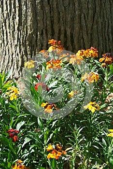 Velvet Flower Stock Photography - Image: 25121322