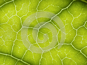 Green Leaf Royalty Free Stock Photos - Image: 25128438