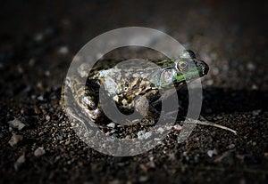 Frog Side Dark Stock Images - Image: 25136234