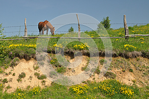 Hill Fence Horse Royalty Free Stock Photography - Image: 25138467