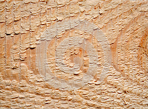 Cut Of A Tree Stock Photography - Image: 25143332