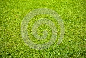 Grass Background Stock Photos - Image: 25171623