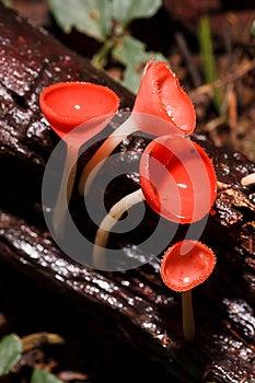 Orange Mushroom Stock Photography - Image: 25172952