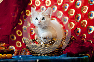 Kitty In A Basket Royalty Free Stock Images - Image: 25176629