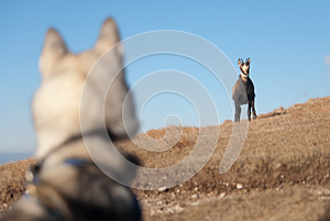 Face To Face Stock Image - Image: 25186051
