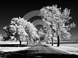 Ash Lane In Infrared Stock Photo - Image: 25186430
