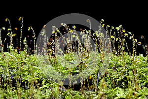 Sparkling Moss Royalty Free Stock Photos - Image: 25197828