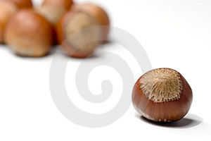 Hazelnuts Isolated Stock Photography - Image: 2529362