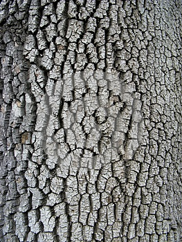 Bark Texture Royalty Free Stock Image - Image: 25206086