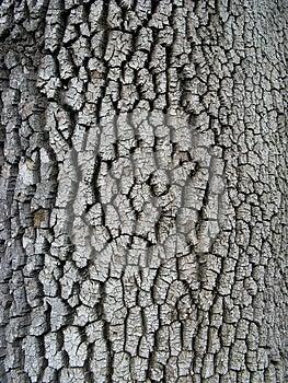Textura De La Corteza Imagen de archivo libre de regalías - Imagen: 25206086