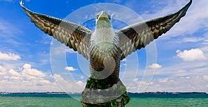Eagle Stock Images - Image: 25208314