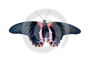 Butterfly In Black And Red Tones Stock Photo - Image: 25209460