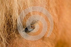 Eye Of Horse Royalty Free Stock Photo - Image: 25210175
