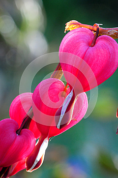 Heart Flowers Stock Image - Image: 25211001