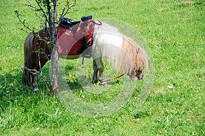 Pony Royalty Free Stock Photography - Image: 25211867