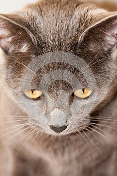 Gray Kitty Stock Images - Image: 25216654