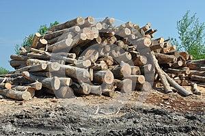 Wood Set Royalty Free Stock Image - Image: 25230386