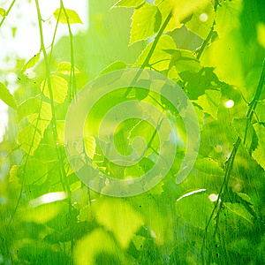 Grunge Paper Texture. Stock Photography - Image: 25239082