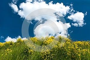 Landscape Royalty Free Stock Images - Image: 25242529