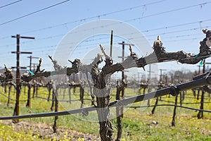 Vineyard In Spring Royalty Free Stock Image - Image: 25243176
