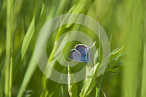 Stock Photography: Butterfly. Image: 25244432