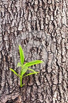 New Tree Life Stock Image - Image: 25262201