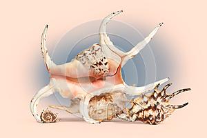 Sea Shells In Retro Style. Stock Photography - Image: 25291352