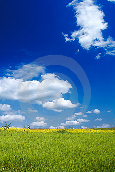 Summer Landscape Stock Images