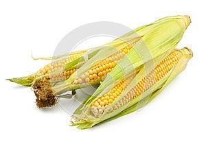 Corn Group Royalty Free Stock Photos - Image: 25317378