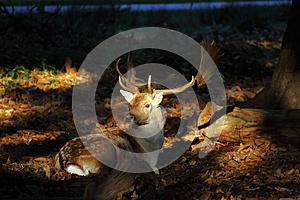 Deer In Forest Royalty Free Stock Image - Image: 25320846