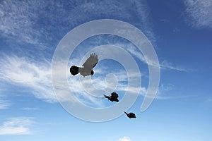 Birds Royalty Free Stock Image - Image: 25324226