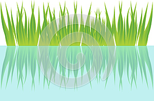 Grass And Water Royalty Free Stock Photography - Image: 25344307