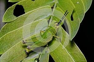 Little Grasshopper Stock Photos - Image: 25376193