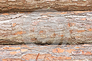 Three Pine Tree Logs Royalty Free Stock Images - Image: 25377169