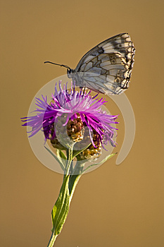 Small Butterfly Stock Photo - Image: 25379810