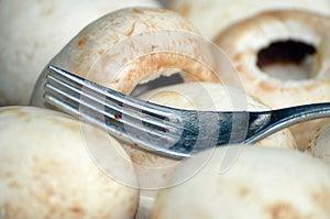 Mushroom Stock Photos - Image: 25397193