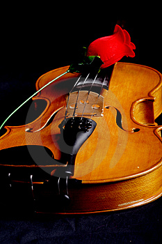 Rose Melody Stock Photography - Image: 2545382
