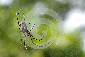 Spider In A Web Royalty Free Stock Image - Image: 25403786